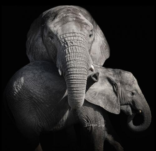 Elephantchild880